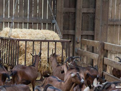 Vakantiehuis in de buurt van geitenboerderij van Ozo